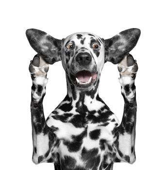 dog shocked